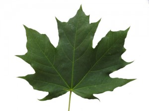 Maple-leaf-green